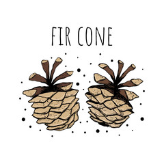 Fir cone. Vector illustration. Christmas background. Drawing by hand