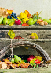 autumnal harvest still life with apples, pears, grapes, nuts and berries in foliage on wooden board and white wall background