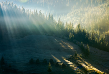 light through fog in forest on hill. gorgeous nature background in autumn