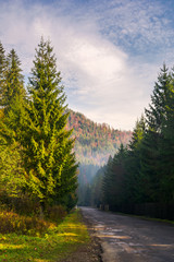 road through deep spruce forest. some haze in the distance. lovely autumn scenery in mountains. wonderful sunny morning. vertical