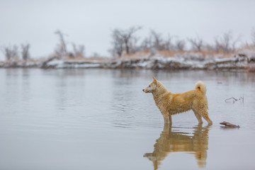 the dog on the river