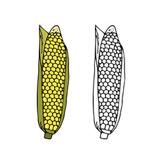 Ripe corn cob with leaves. hand drawn vector illustration.doodles  cartoon style.