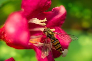 Owad na czerwonym kwiatku makro