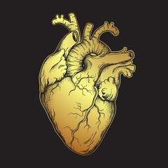 Human heart of gold. Anatomically correct hand drawn line art and dotwork flash tattoo or print design vector illustration.