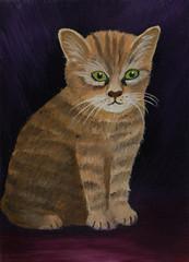 Braun gestreifte Katze vor einem lila Hintergrund