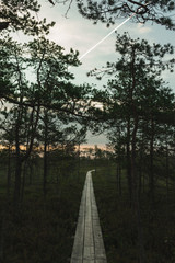Landscape of a wooden trail in swamp leading forwards. Preserved outdoor territory of Ķemeri National park in Latvia.