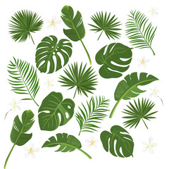 Vector set of exotic tropical leaves. Jungle leaf banana, areca palm, fern, plumeria. Illustration for summer style tropical paradise advertising design happy vacation.