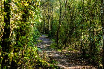 Walking trail around the Blue Lake - Rotorua