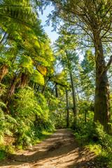 Beautiful walking track - Blue Lake  - Rotorua