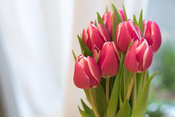 Szukaj zdjęć: Kategoria: Rośliny i kwiaty | 359 x 240 jpeg 22kB