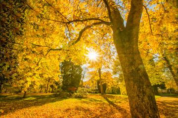 Wunderschöner bunter goldener Herbst