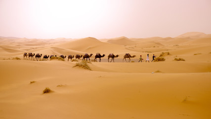 The desert of Morocco. Panoramic landscape of Sahara desert
