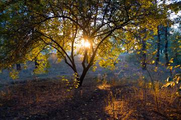 yellow tree, autumn tree and sun, light, autumn