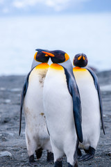 Beautiful shots of cute penguins in the Antarctica snow