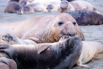 Portrait shots of seals, sea lions and elephant seals in Antarctica