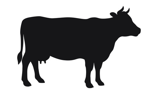 Cow graphic icon. Cow black silhouette isolated on white background. Vector illustration
