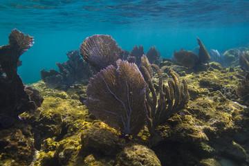 Papiers peints Sous-marin Roatan coral reef