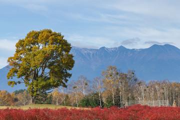 開田高原、ナラの木と御嶽山