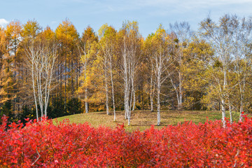 開田高原の秋