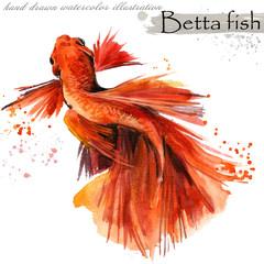 Betta fish hand drawn watercolor illustration