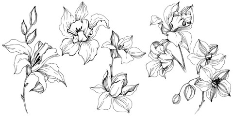 Vector tropical orchid flower. Floral botanical flower. Isolated illustration element. Vector wildflower for background, texture, wrapper pattern, frame or border.