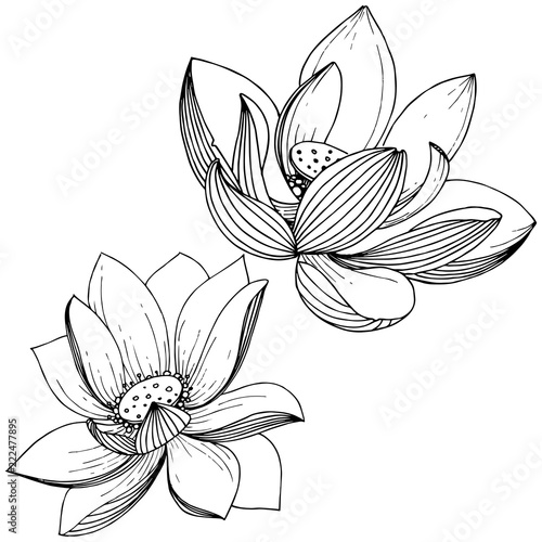 Vector Lotus Flower Floral Botanical Flower Isolated Illustration