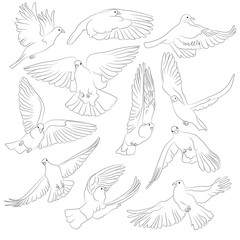 Set of isolated flying birds. Vector illustration of pigeon