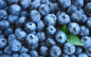 Blueberries with full frame for wallpaper or texture.