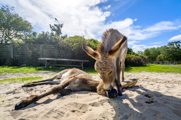 Donkey friends in the sand at a farm
