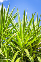 Tropical palm tree leaves in fresh green colors