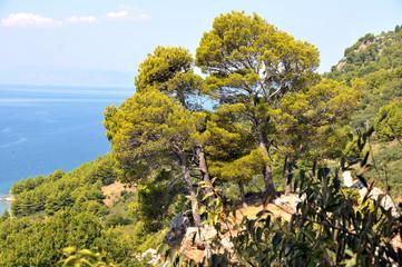 Baumgruppe an der Küste von Igrane