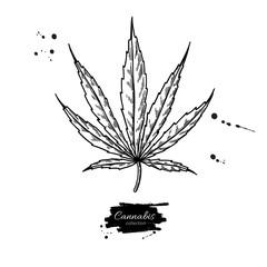 Marijuana leaf vector drawing. Cannabis botanical illustration. Hemp plant sketch.