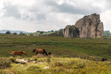 Horses pasturing in the plateau of Argimusco, in Sicily, with a natural megalith in the background