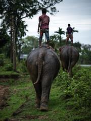 Elephant Riders