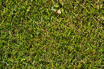 The texture of a green natural lawn with a leaf on top