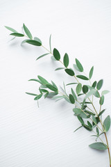 Beautiful twig with green leaves closeup on a light wooden background. Floristics, natural scenery and decoration. Botanical background. Organic products or cosmetics