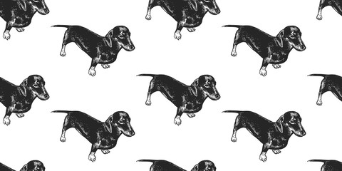Seamless pattern with cute puppies of Dachshund.