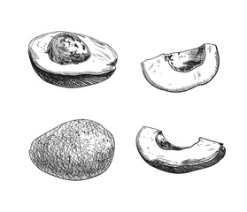 Vector Avocado Sketches Set, Black Drawings Isolated, Hand Drawn Fruits.