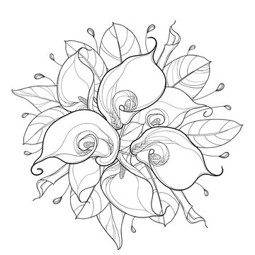 Vector round bouquet of outline Calla lily flower or Zantedeschia, bud and ornate leaf in black isolated on white background. Contour tropical calla flower bunch for summer design or coloring book.