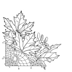 Vector corner bouquet with outline Acer or Maple ornate leaves in black isolated on white background. Composition with foliage of Maple tree in contour style for autumn design or coloring book.