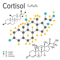 Chemical formula, structure and model of the cortisol molecule, vector illustration
