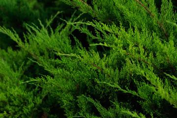 Door stickers tree, spring, fresh, mint, foliage, summer, flora, macro, herb, flower, botany, rose, linden, garden, natural, growth, closeup