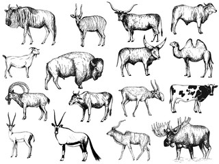 Big set of hand drawn sketch style ungulates isolated on white background. Vector illustration. Wall mural