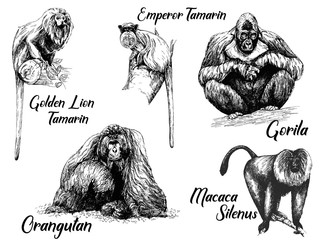 Set of hand drawn sketch style apes isolated on white background. Vector illustration.
