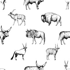 Seamless pattern of hand drawn sketch style ungulates isolated on white background. Vector illustration.