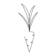 Carrot editable continuous line vector illustration - single line drawing of ripe vegetable.