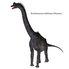 Brachiosaurus Dinosaur on White with Font