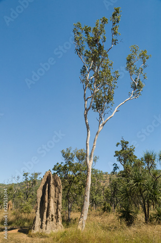 A Large Termite Mound Next To A Spindly Tree In The Outback Of