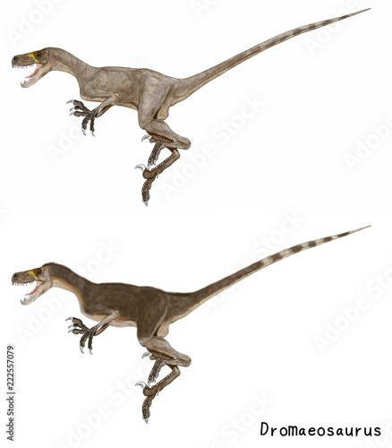 学名:ドロマエオサウルス。.白...