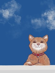 Brown cat with sky background